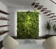Вертикальное озеленение в доме