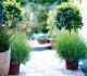 Дизайн сада с контейнерами для растений