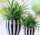 Вьющиеся комнатные растения — верные помощники фитодизайнера
